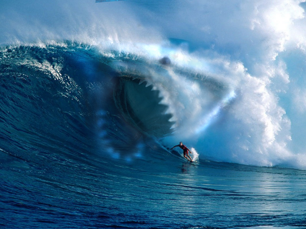 Shark while surfing